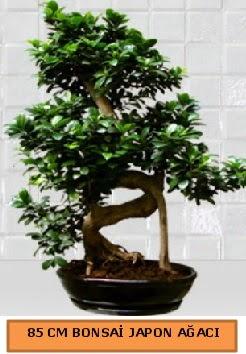 85 CM Japon ağacı Bonsai saksı bitkisi  ucuz çiçek gönder