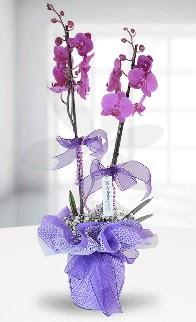 Çift dallı mor orkide LİKE MARKADIR  Polatlı anneler günü çiçek yolla
