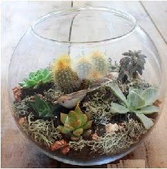 Cam fanusta 7 kaktüslü terrarium  çiçekçi mağazası