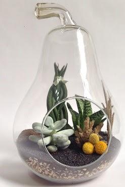 Orta boy armut 5 kaktüs terrarium  ucuz çiçek gönder