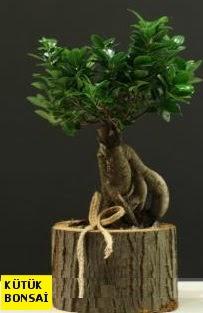 Kütük içerisinde Bonsai japon ağacı  internetten çiçek siparişi