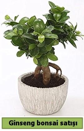 Ginseng bonsai japon ağacı satışı  Polatlıya çiçek Ankara çiçekçi telefonları