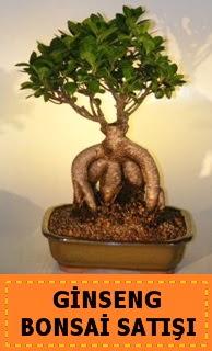 Ginseng bonsai satışı japon ağacı  Polatlı cicek , cicekci