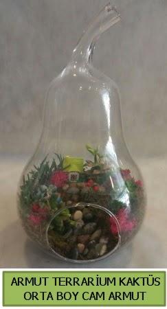 Cam Armut terrarium 5 kaktüs  Polatlıda çiçek firması çiçek gönderme