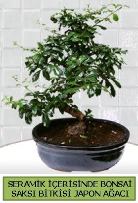 Seramik vazoda bonsai japon ağacı bitkisi çiçek siparişi sitesi