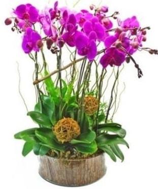 Ahşap kütükte lila mor orkide 8 li  Polatlı internetten çiçek satışı