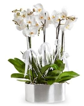 Beş dallı metal saksıda beyaz orkide  Ankara Polatlı çiçek yolla