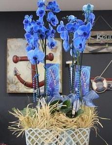 4 dallı özel mavi orkide  Polatlı çiçek siparişi vermek