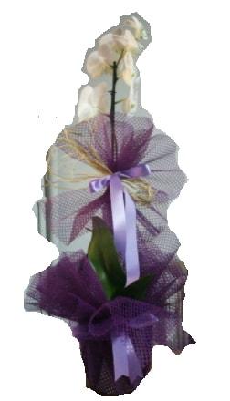 Tek dallı beyaz orkide süper kalite ithal çiçek siparişi sitesi