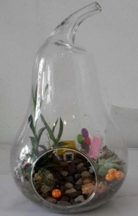 Orta boy cam armut terrarium  Polatlı çiçek satışı