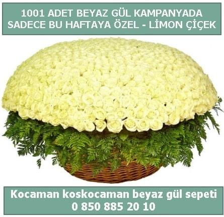 1001 adet beyaz gül sepeti özel kampanyada  Polatlı çiçek gönderme sitemiz güvenlidir