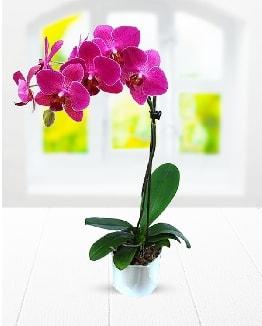 Tek dallı mor orkide  Polatlı çiçek satışı