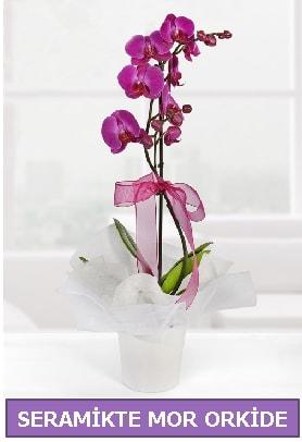 Seramik içerisinde birinci kalite tek dallı mor orkide  Ankara Polatlı İnternetten çiçek siparişi