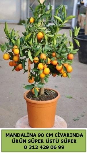 Mandalina Ağacı bitkisi  Polatlı çiçek gönderme sitemiz güvenlidir