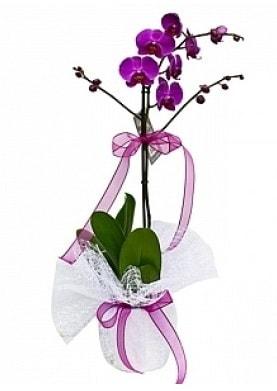 Tekli Mor Orkide  Ankara Polatlı çiçek yolla