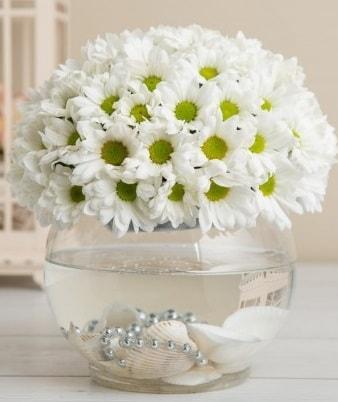 Fanusta beyaz Papatya  Polatlı çiçek satışı