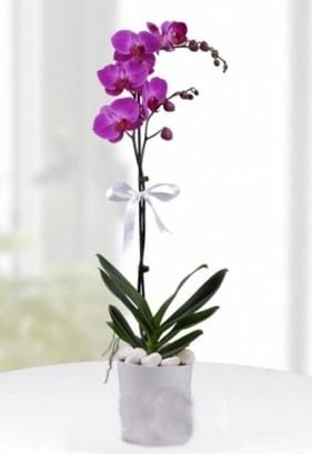 Tek dallı saksıda mor orkide çiçeği  Polatlıdaki çiçekçiler