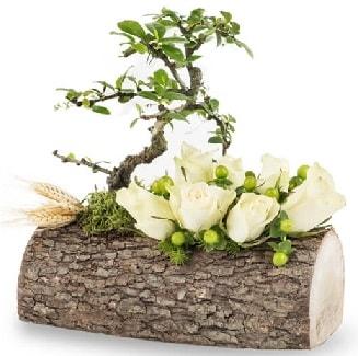 Doğal kütükte bonsai ağacı ve 7 beyaz gül  Polatlı çiçek gönderme sitemiz güvenlidir