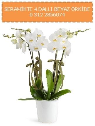 Seramikte 4 dallı beyaz orkide  Polatlıdaki çiçekçiler
