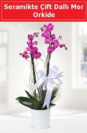 Seramikte Çift Dallı Mor Orkide  Polatlı anneler günü çiçek yolla