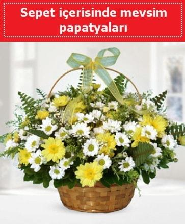 Sepet içerisinde mevsim papatyaları  ucuz çiçek gönder