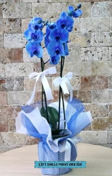 çift dallı ithal mavi orkide  Ankara Polatlı çiçek yolla