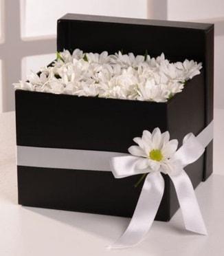 Kutuda beyaz krizantem papatya çiçekleri çiçek siparişi sitesi