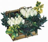 Polatlıdaki çiçekçiler  13 adet sandikta beyaz gül
