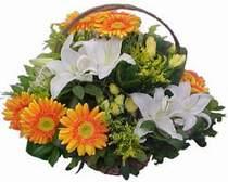 Ankara Polatlı online çiçekçi , çiçek siparişi  sepet modeli Gerbera kazablanka sepet