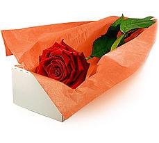Polatlıya çiçek çiçek mağazası , çiçekçi adresleri  Kutuda tek gül özel kisilere